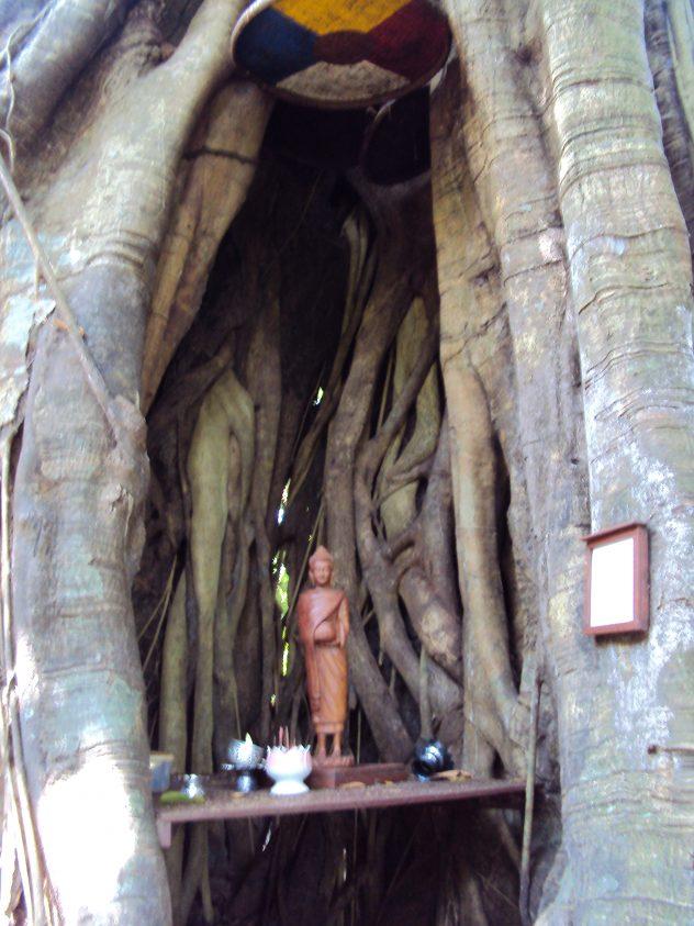 The Standing Buddha