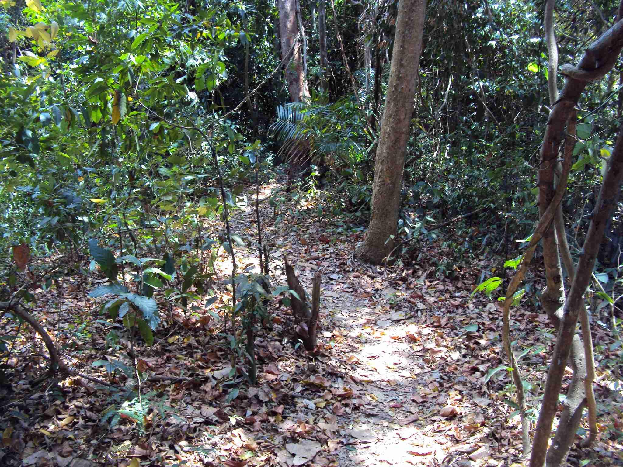 The path gets narrow