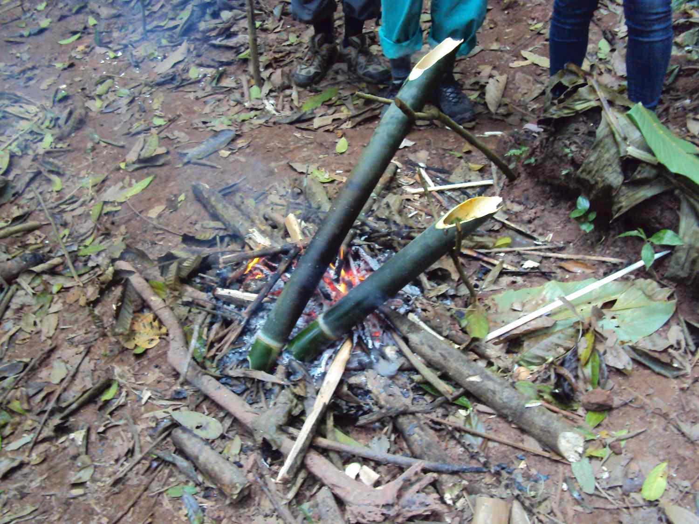 Bambus als Ausgangsmaterial