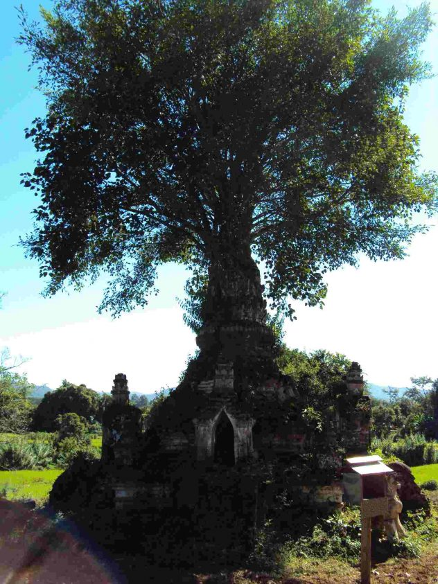 Tree out of the temple