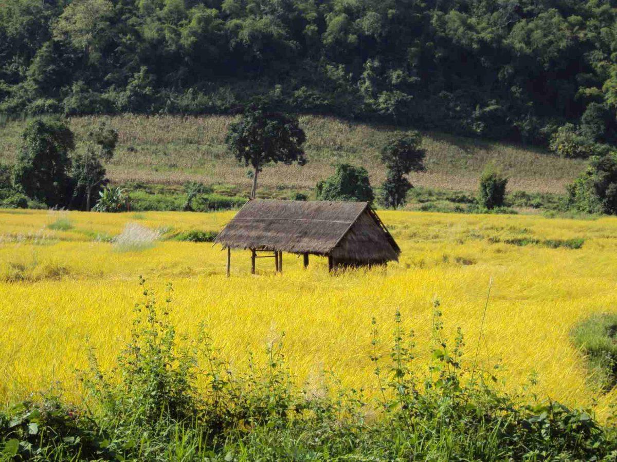 Hütte im Feld