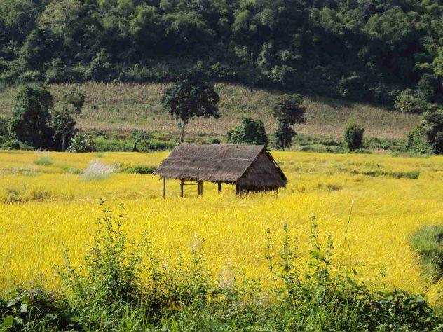 Hut in field
