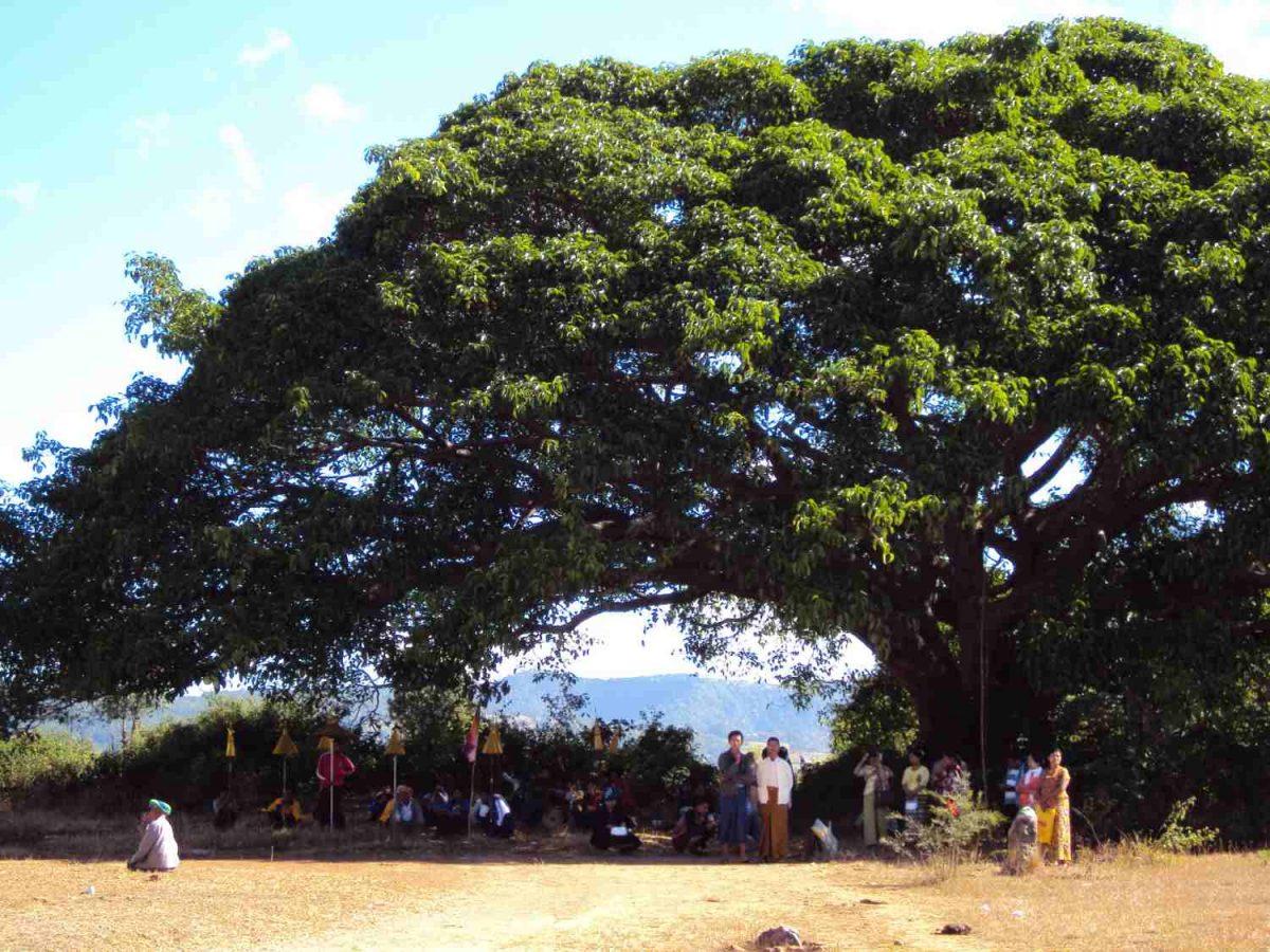 Die Gläubigen versammeln sich im Schatten der Bäume