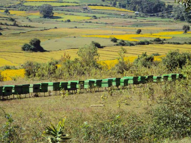 Bee Hives?