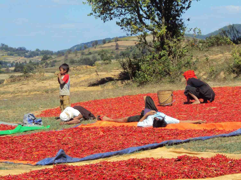 A red sea of peperoncini