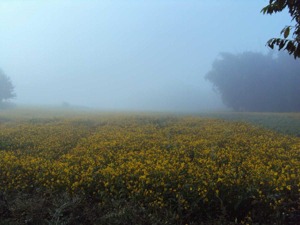 Fields in fog