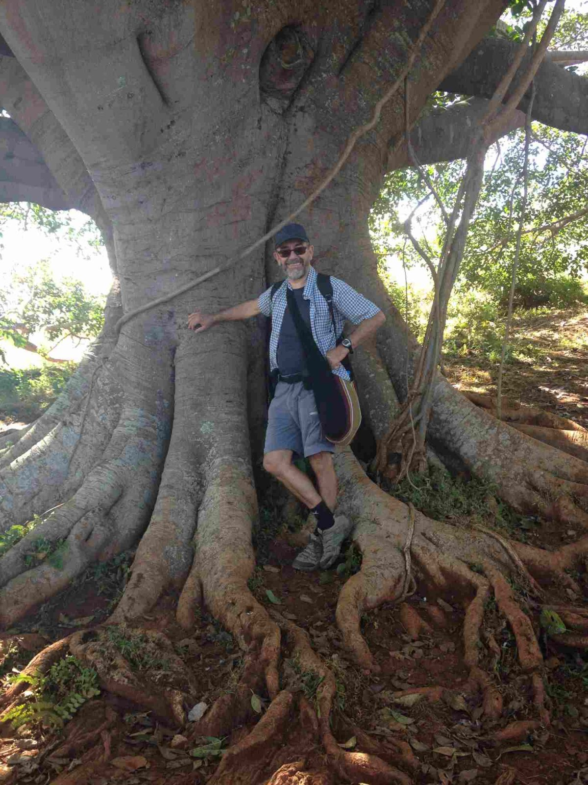 Huge trees and me