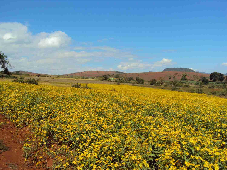 Gelbe Blumen - rote Erde