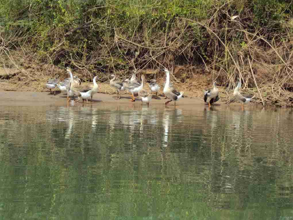 Vögel am Ufer