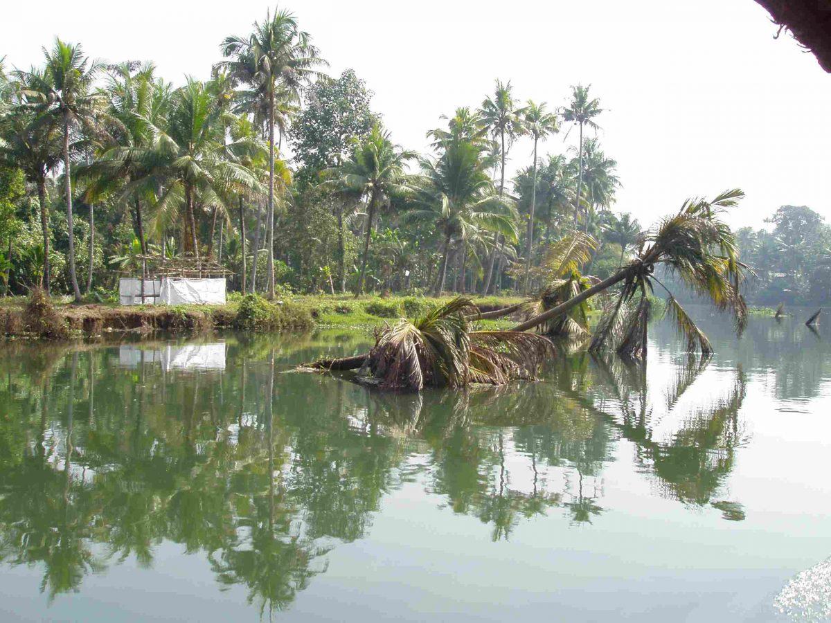 Umgefallene Palme im Wasser