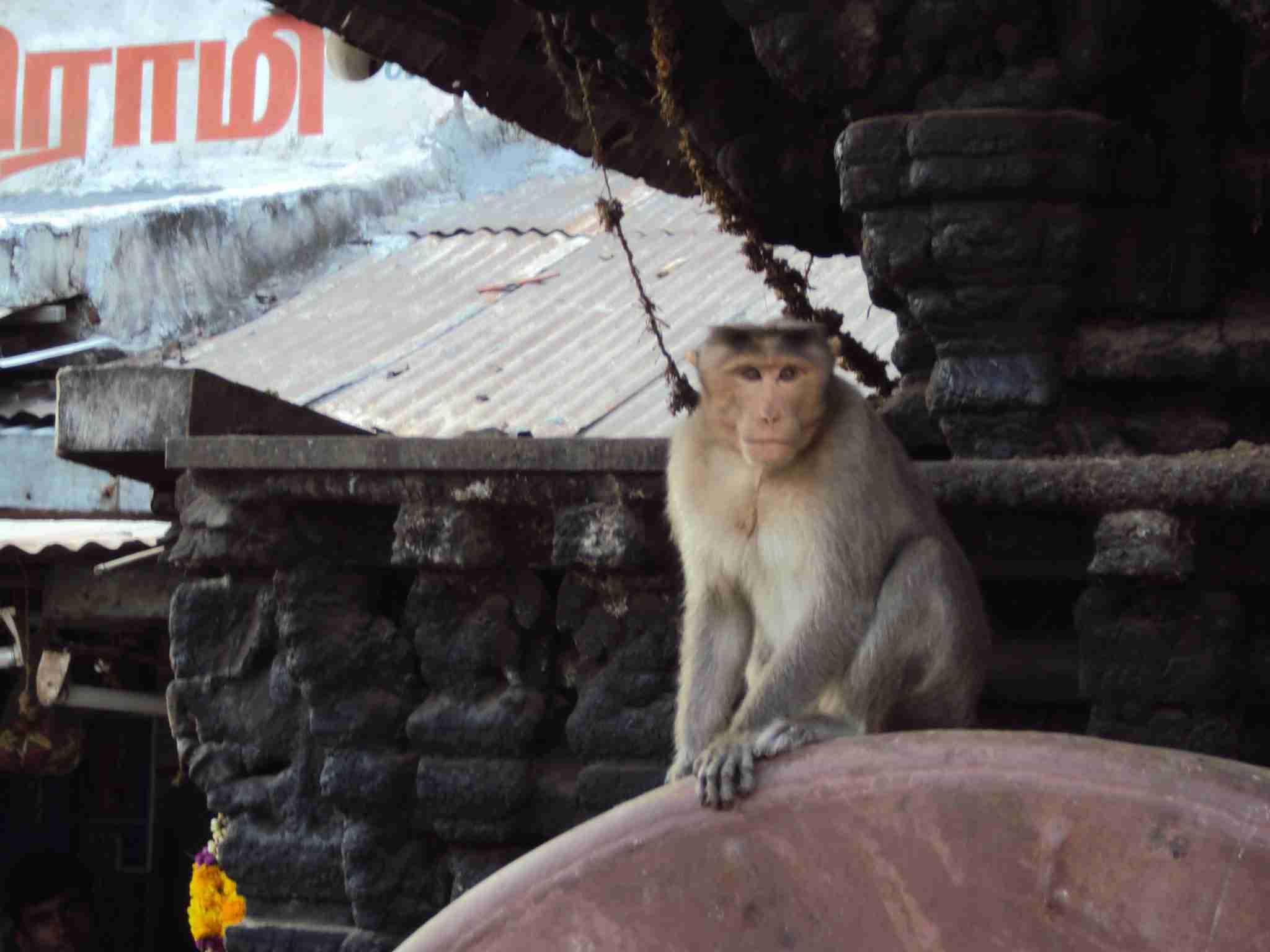 Even the monkeys find the strangers weird