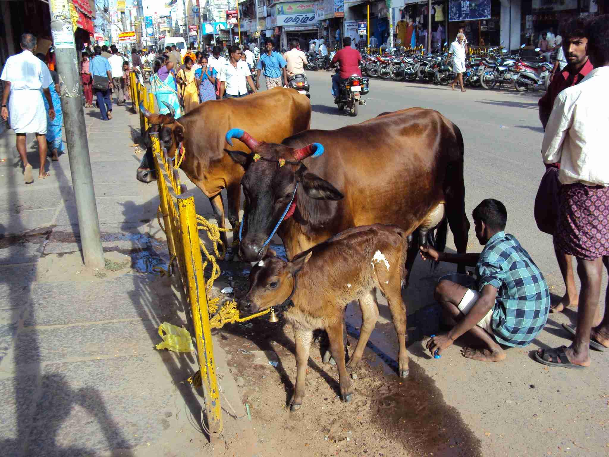 Madurai street scenes