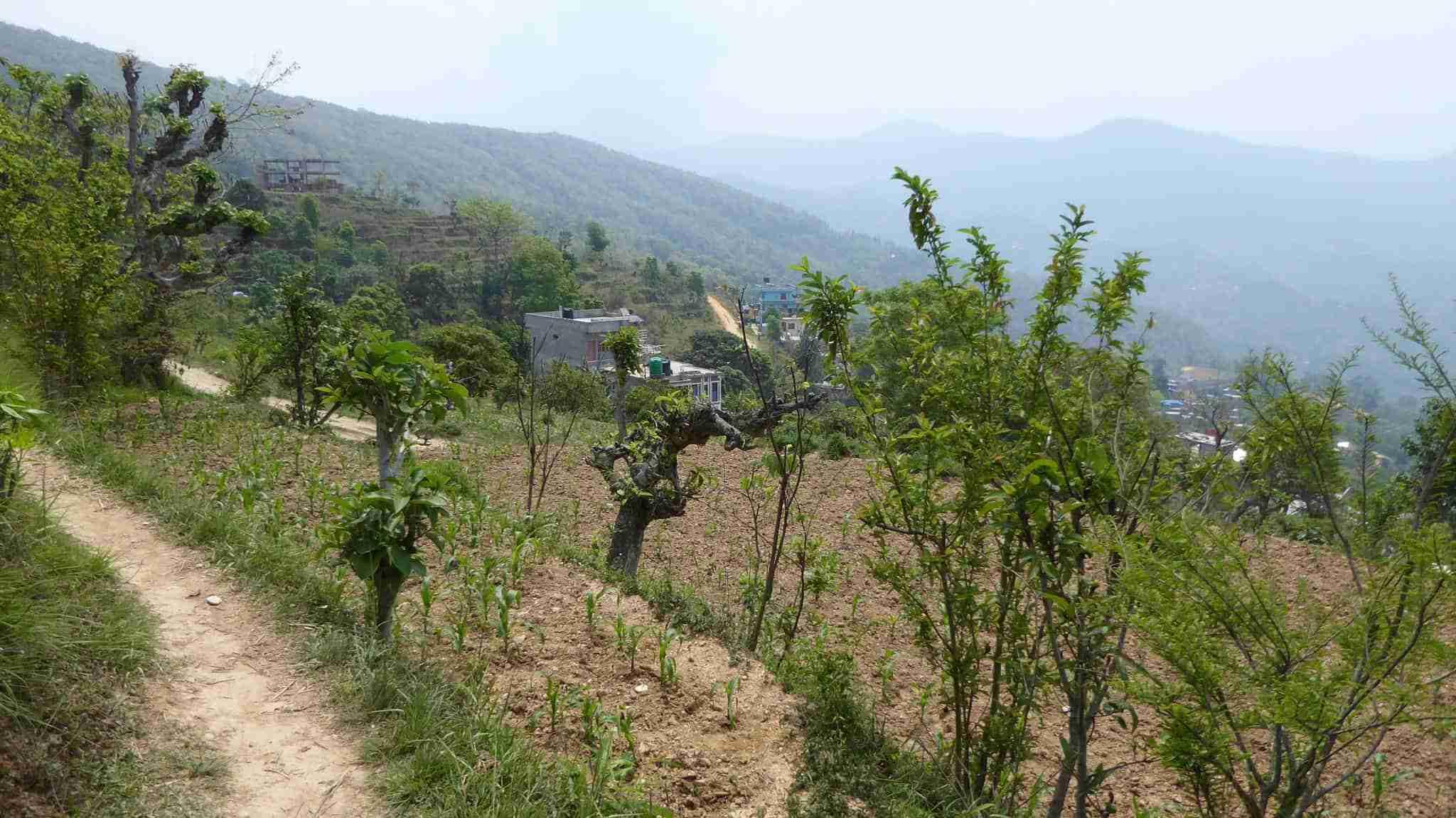 Path to the Tadchi Mai