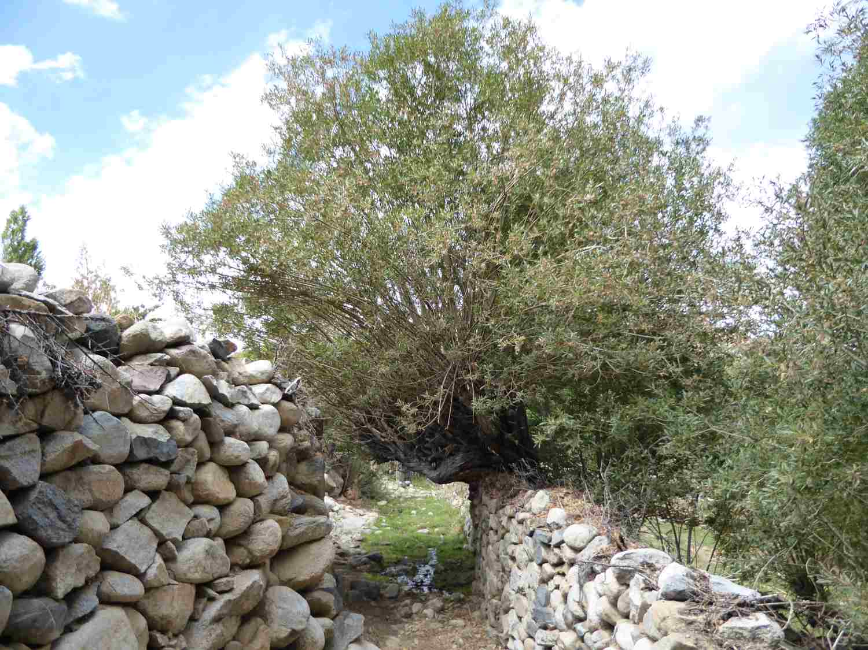 Mauern und Bäume