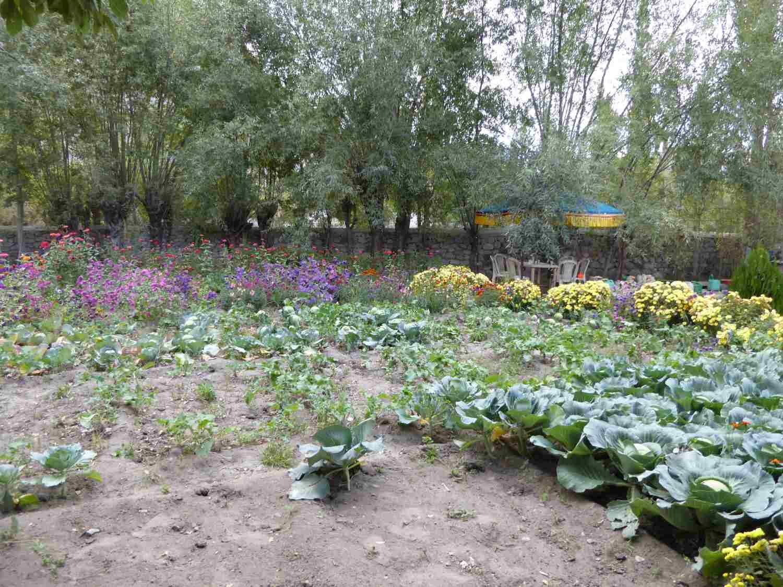 Vegetable garden in Hundar