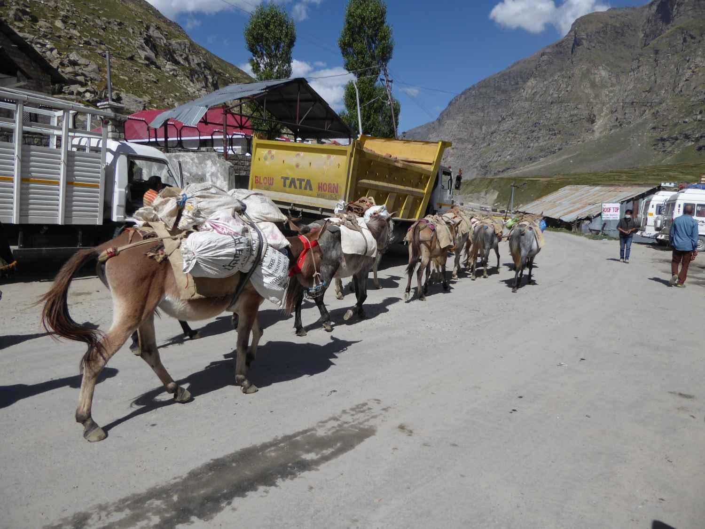 A few huts, a few restaurants - and some donkeys