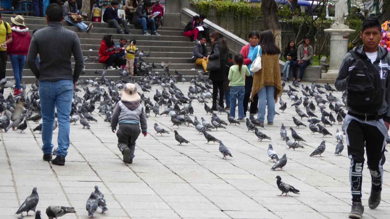 Children and pigeons