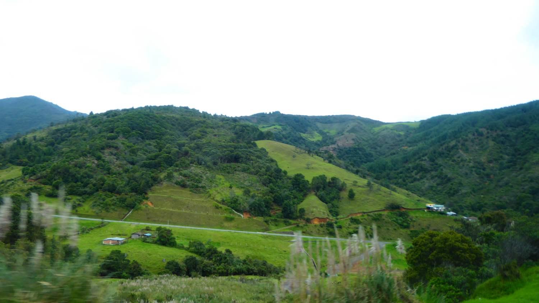 Green Landscape 4
