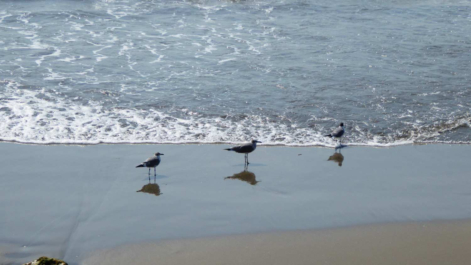 ... and some birds