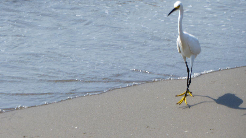 Bird at beach in Cartagena