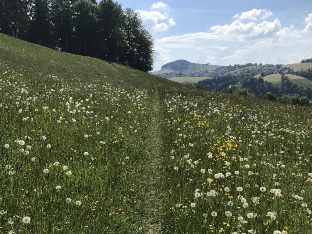 Walk through blossoming meadows