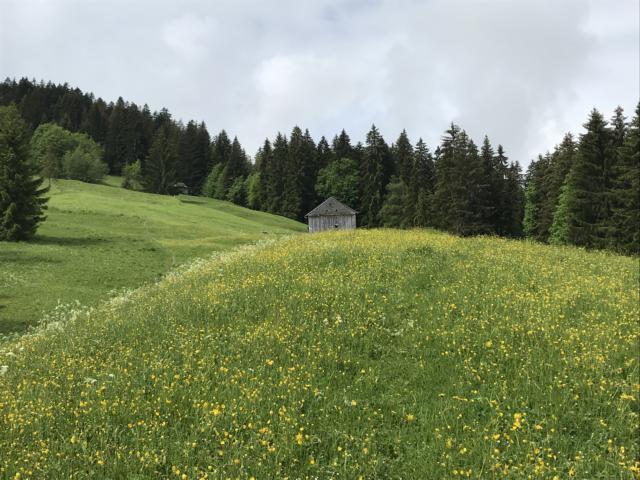 Blooming meadows - again