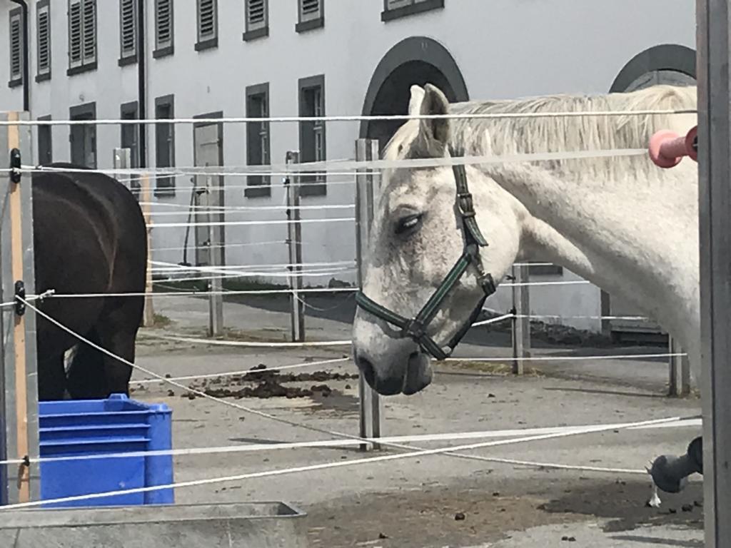famous horse breeding