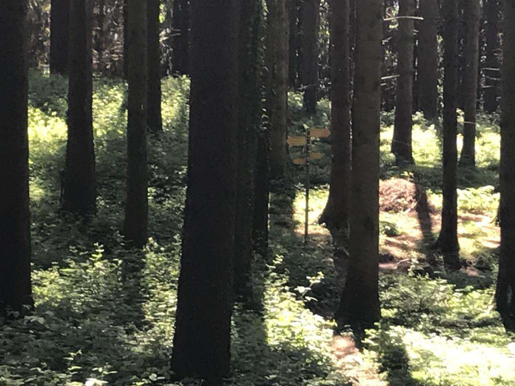 Deep in teh Forest