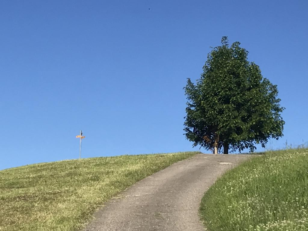 Lonely Tree at hill
