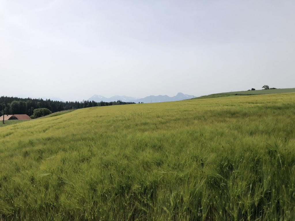 On top of the Belpberg