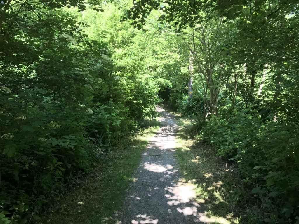 Path through shady trees