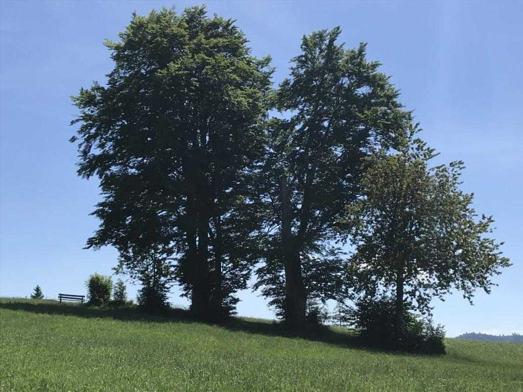 Shady trees abover Luthern