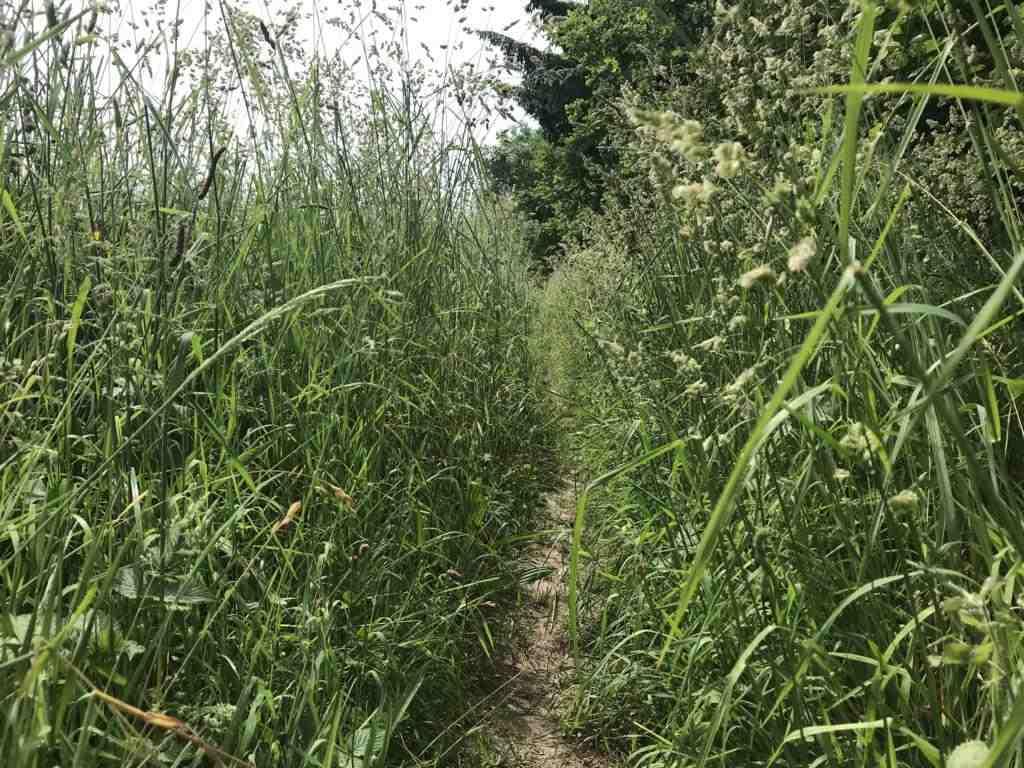 Walking through high grass