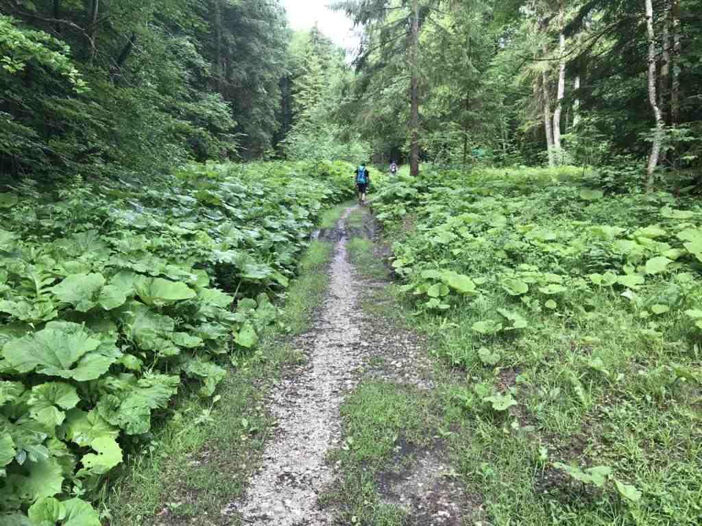 Walking through a green world