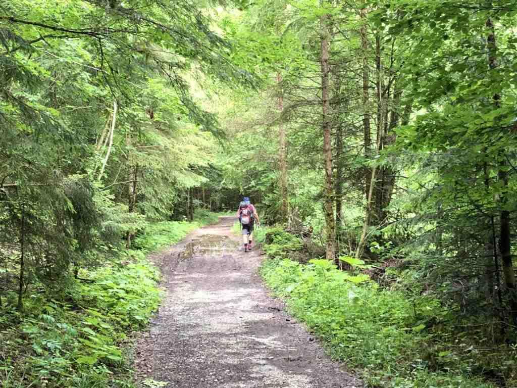 Through dense forest