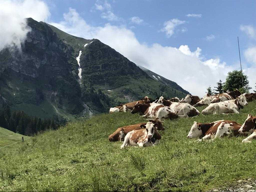 And again cows - my favorite animals (except every other animal)