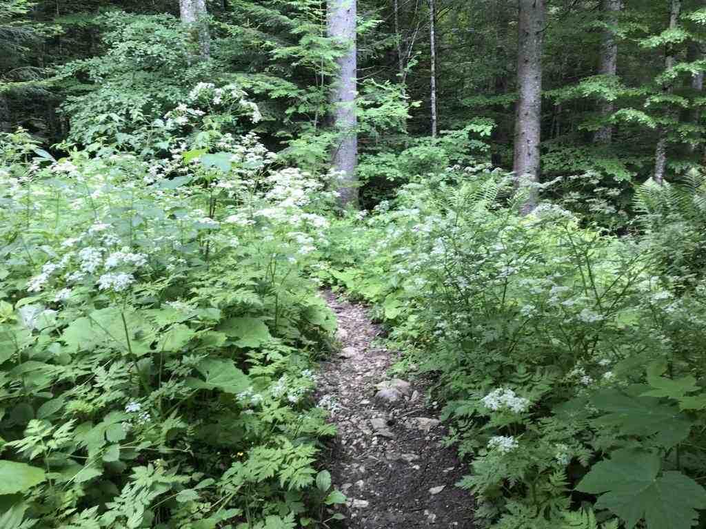 Path through dense forest